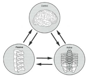 Conceptos Biomecánicos 3